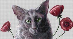 Oriental Poppies 1
