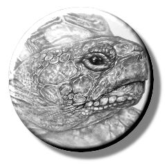 Tortoise (Needleminder)