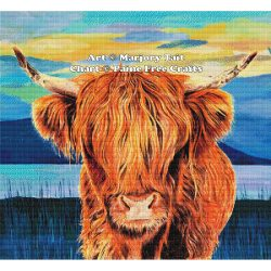 Highland Coo (Cow)