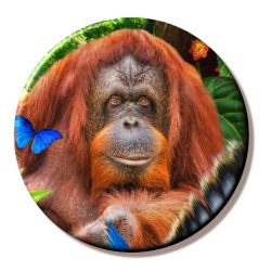 Animal Mix – Orangutan (Needleminder)