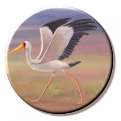 Yellow Billed Stork (needleminder)